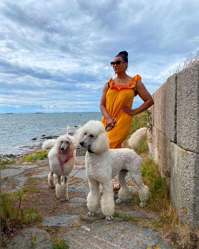 Jos ottaisin koiran, ottaisin tällaisen. 🧡🐩🧡  #standardpoodle